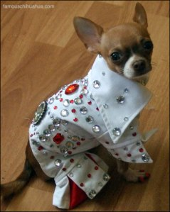 Elvis lookalike dog